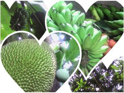 buah-kebun