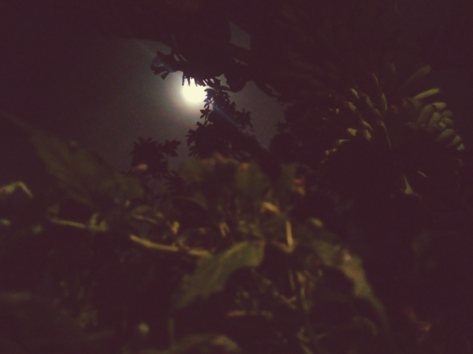 Rembulan di balik dedaunan dalam kelam malam