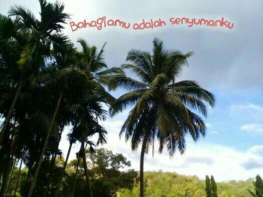 Pohon kelapa tinggi dan kuat, ada yang lebih kuat darinya